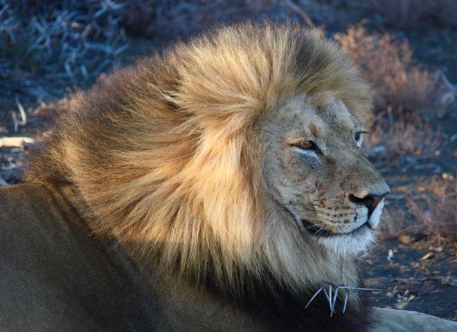 Safari & Game Reserves Escape to the Beach3